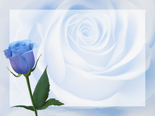 Realistic Blue Rose, Background