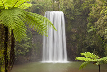 Milla Milla Falls, Atherton Highlands Near Cairns, Queensland