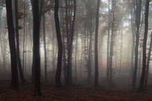 Fairytale Forest With Fog And ...