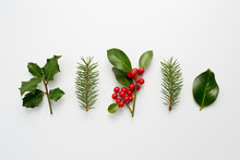 Collection Of Decorative Christmas Plants With Green Leaves And Holly Berries.
