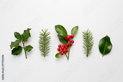 Fototapeta Collection of decorative Christmas plants with green leaves and holly berries. obraz