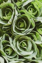 Brassica Green Overhead
