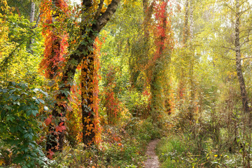 Panel Szklany Eko Beautiful autumn scene in the forest
