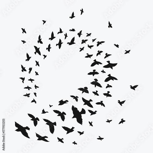 Fotografía Silhouette of a flock of birds