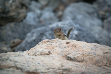 Little Chipmunk Sitting On A R...