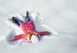 happy girl on snow