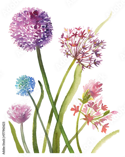 Ręka malował nakreślenie skład purpurowi allium kwiaty, akwareli ilustracja odizolowywająca na białym tle. Akwareli nakreślenia ilustracja allium kwitnie na białym tle