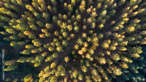 Aerial view of forest at autumn