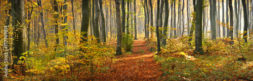 Foto op Canvas Weg in bos The road in the beautiful autumn forest