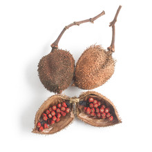 Brazilian Urucum Annatto Seeds