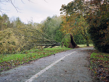 Falling Tree After Storm,North...