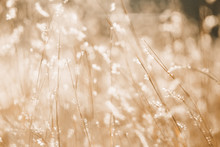 Abstract Background Of Wild Flowers And Grass. Blurred Background Of Meadow