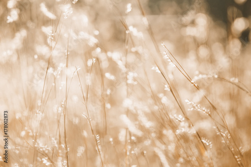 Plakaty beżowe  abstract-background-of-wild-flowers-and-grass-blurred-background-of-meadow