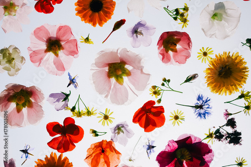 Blooming colorful flower on cloudy white background