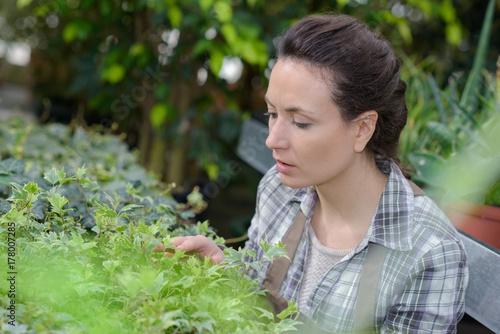 Zdjęcie XXL kontrola roślin