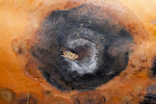 Black Rotten Spot