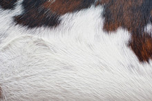 Cow Skin For Furniture Use With Pattern