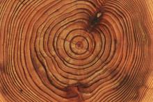 背景素材|木の年輪|...