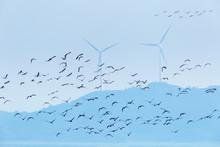 Migratory Birds And Wind Farm Background