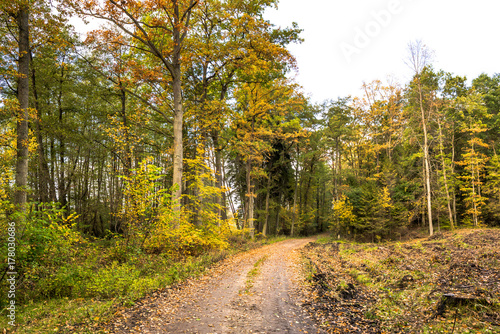 Keuken foto achterwand Begraafplaats Scenery of forest in autumn, landscape with path between trees and colorful scenic nature at fall