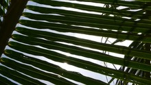 Sunlight Through The Leaves Of Palm Trees At Tropical