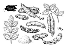Carob Vector Superfood Drawing...