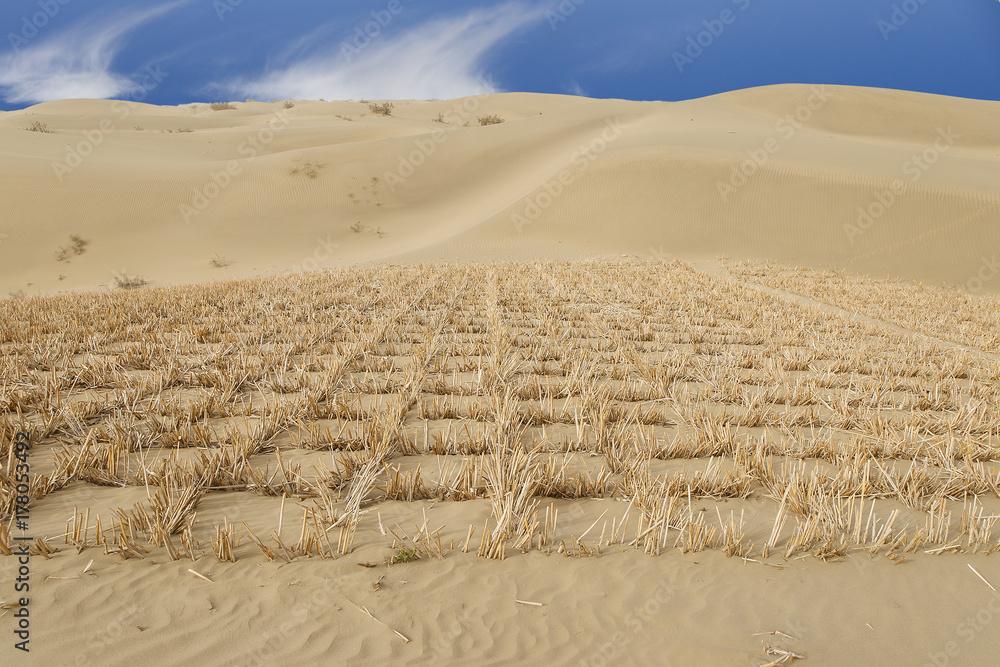 Taklimakan Desert Map on