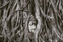 Worship Of Thailand,Buddha Sta...