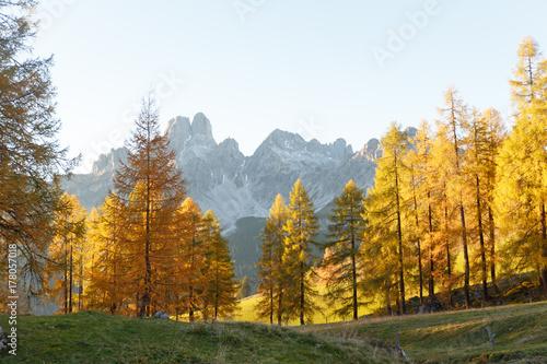 Plakat Piękne larwy na jesieni. Alpy Austriackie