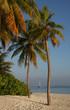 Palme sulla spiaggia