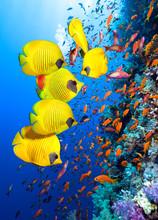 Underwater Image Of Coral Reef...