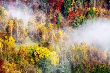 Panel Szklany Podświetlane Inspiracje na jesień Colorful autumn forest