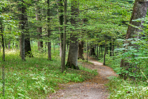 Keuken foto achterwand Weg in bos Beautiful Green Forest In Summer. Countryside Road, Path, Way, Lane, Pathway On Sunny Day In Spring Forest. Sunbeams Pour Through Trees