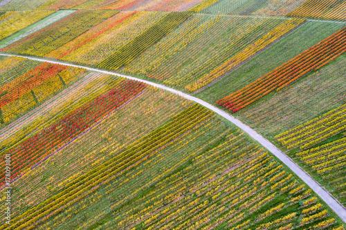 Fotodibond 3D Widok z lotu ptaka winnicy przy Schnait w jesieni, Remstal, Baden Wuerttemberg, Niemcy
