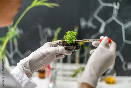 Fotografía  Doing tests on plants