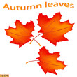 Beautiful leaves - a symbol of autumn. Yellow and red autumn leaves maple leaves. Autumn leaf isolated on white background. Vector illustration.