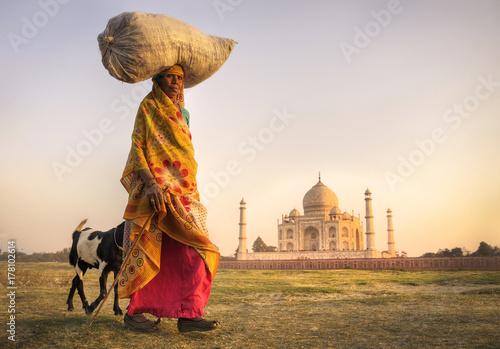 Indian woman and goats near the taj mahal. Tableau sur Toile