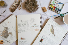 A Collection Of Nature Journals And Supplies