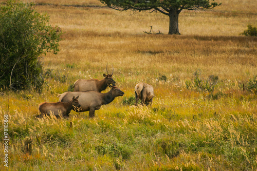Foto auf Gartenposter Reisfelder Fall in the Rocky Mountains Elk Retreat