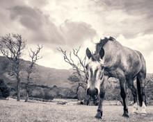 A Horse Stares At The Camera I...