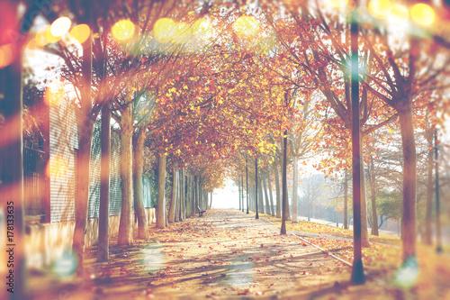 Zdjęcie XXL Jesień abstrakcjonistyczny tło Park i drzewa. Spadek krajobraz w city.Lens flary i sunbeam