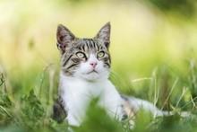 Cat Portrait Background