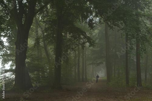 Door stickers Dog wandelaar met hond in beukenlaan van de Kruisbergse bossen in de Achterhoek op en mistige dag
