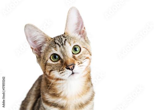 zblizenie-ladny-kotek-twarz