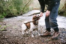 Dog And Man Playing With A Stick