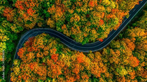 Valokuva  Aerial view of thick forest in autumn with road cutting through