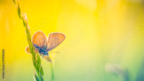 Foto auf Gartenposter Orange Nature background concept. Beautiful summer nature meadow background. Flowering green meadow on spring sunset light. Bright summer spring nature banner design. Inspirational nature closeup meadow.