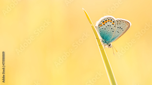 Foto op Aluminium Oranje Nature background concept. Beautiful summer nature meadow background. Flowering green meadow on spring sunset light. Bright summer spring nature banner design. Inspirational nature closeup meadow.