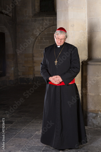 Stampa su Tela Pensive cardinal