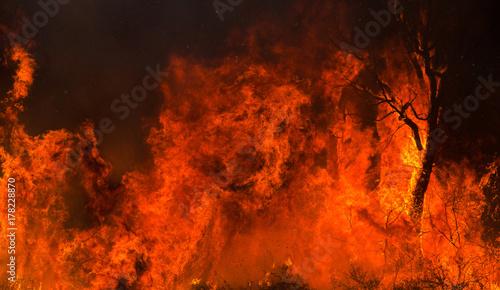 Zdjęcie XXL Sylwetka drzewa połknięte przez płomienie.